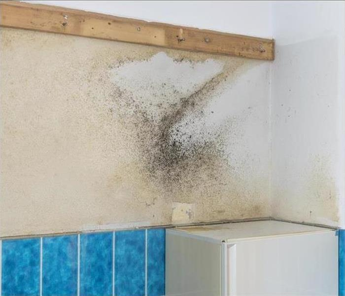 Mold Remediation Mold Damage Asheville - Mold Testing in Asheville