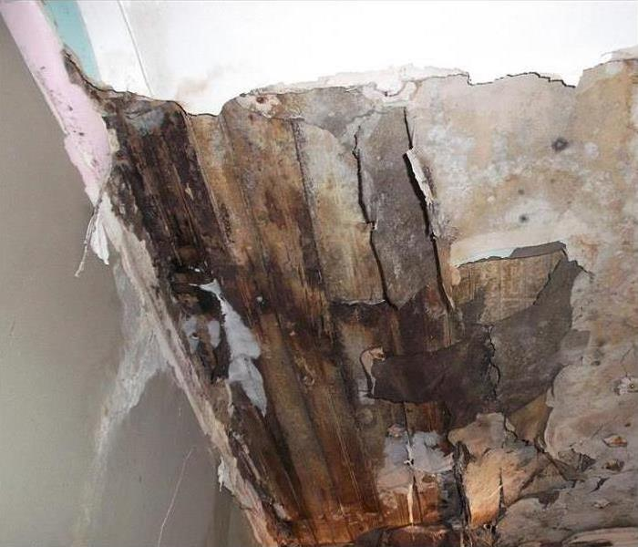Mold Remediation The Types Of Equipment Used by Mold Remediation Specialists