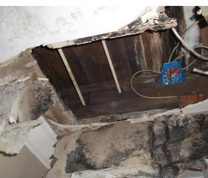 Mold Remediation 3 Tips on Preventing Mold in Your Rental Home