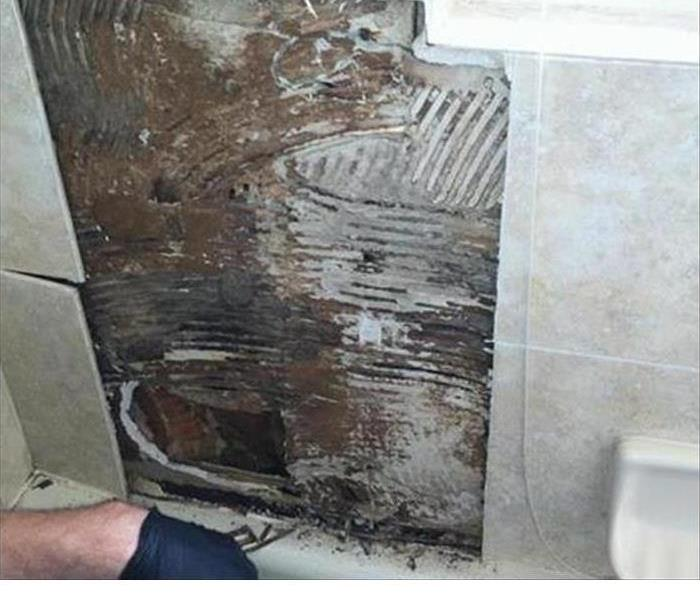 Mold Remediation The Benefits of a Professional Mold Inspection