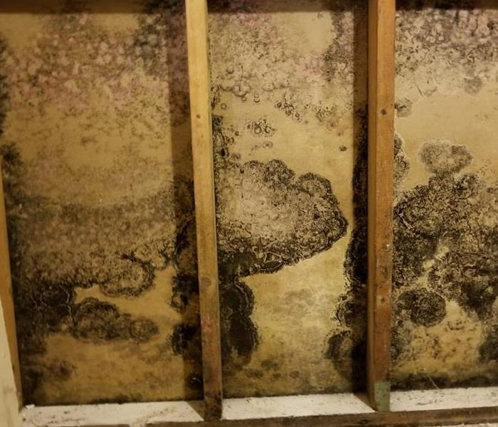 Mold Remediation Mold Cleaning and Remediation: Best Practices To Follow