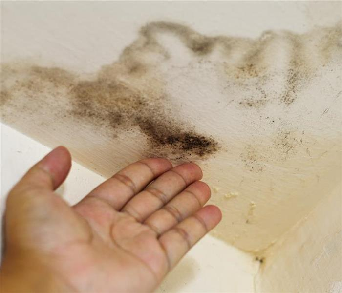 Hand pointing at a ceiling damaged by water and mold